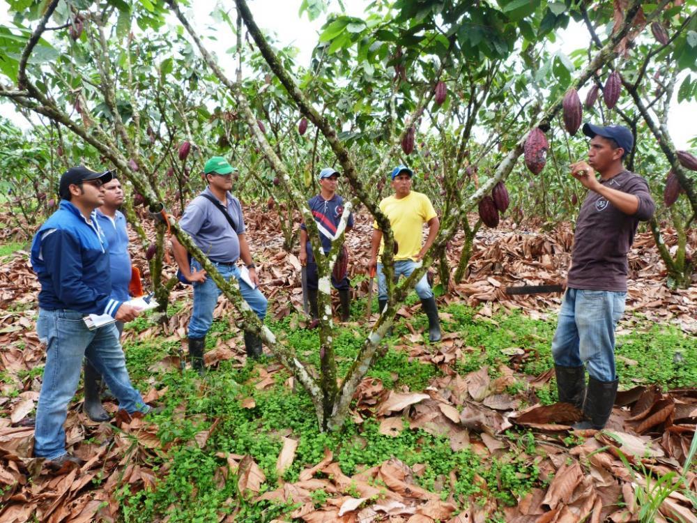 Personal del CIBE conversa con trabajadores de Hacienda San Rafael sobre los pasos del protocolo de registro de datos y aplicación de bioles a utilizar durante la vigencia del proyecto.
